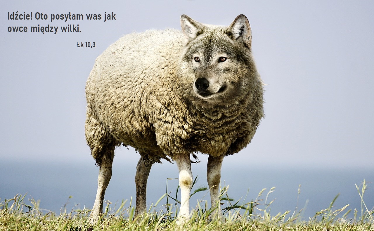 wolf-in-sheeps-clothing-2577813_1280